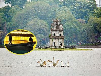 Tung tăng bơi lội chưa đầy 24h, đàn thiên nga trên Hồ Gươm đã bị bắt ngay trong đêm