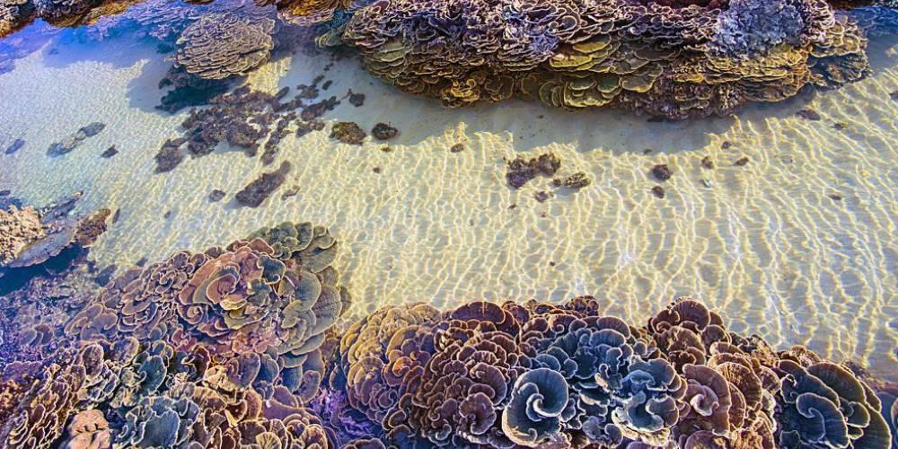 """Có một """"thiên đường san hô"""" đẹp như tranh vẽ được bao du khách ghé đến """"check-in"""" ở Phú Yên"""