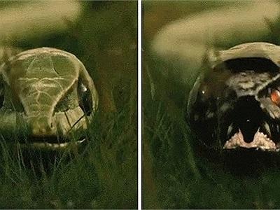 Kinh dị 11 bức ảnh động ghi lại quá trình lột xác của động vật