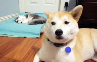 """20 khuôn mặt đáng thương của những chú cún bị đám mèo """"hung hăng"""" cướp mất giường"""
