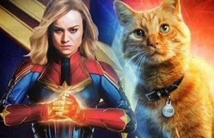 """8 sự thật thú vị về Goose, Đại Boss trong Captain Marvel khiến siêu anh hùng mạnh nhất vũ trụ cũng phải chịu kiếp """"con sen"""""""