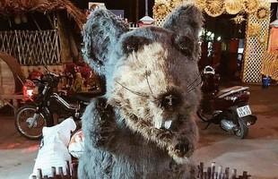 Hết Pika Long, chuột xù Củ Chi là linh vật tiếp theo trúng lời nguyền của năm 2020?