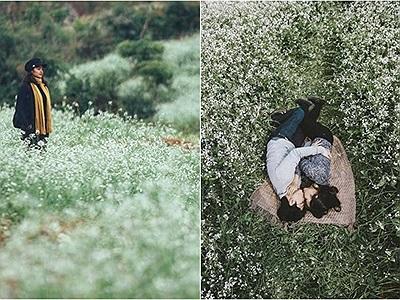 """Đếm ngược từng ngày """"đón"""" mùa cải nở trắng trời Mộc Châu đẹp như vườn địa đàng"""