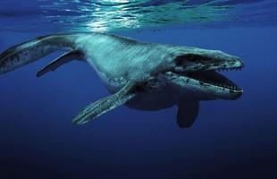 """Những thủy quái đại dương dữ dằn nhất lịch sử tiến hóa, siêu cá mập gặp cũng """"tắt điện"""""""
